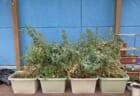 いたぷらコンポスト#47木枠で腐葉土づくり⑧プラ実験開始