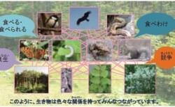【6/5~27】パネル展「生物多様性って、なに?」