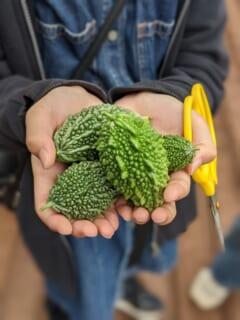 いたぷらコンポスト2021#6収穫体験&さまざまなコンポストを学ぶ回